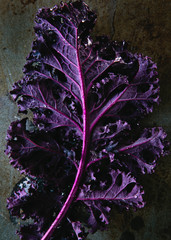 Close Up Purple Kale