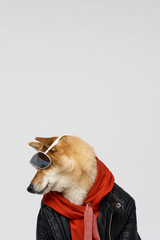 Cool dog outfit