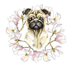 A dog breeds a pug in a floral wreath of magnolia. Puppy painted in watercolor, isolated on white background.