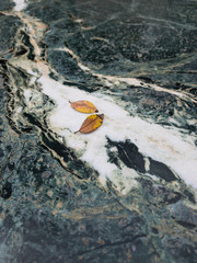 Two Fallen Elm Leaves on  A Marble Top Table