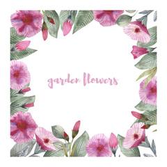 Garden flowers of petunia