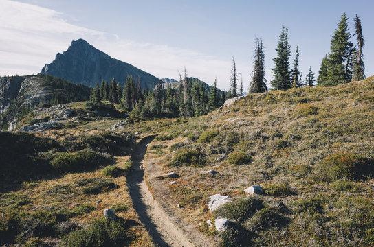 Hiking trail extending through expansive alpine meadow, Pasayten Wilderness, Washington