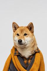 Portrait of stylish pet