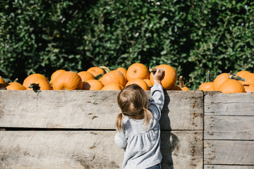 Toddler grabbing a pumpkin