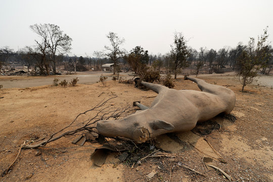 An elk statue lies on its side in a charred neighborhood that was turned to ashes by the Carr Fire west of Redding