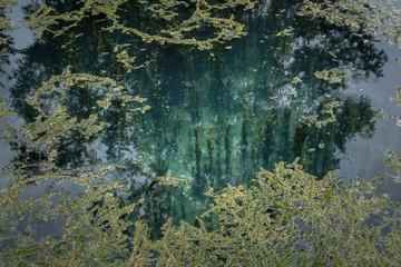 Blue water at Radium Springs