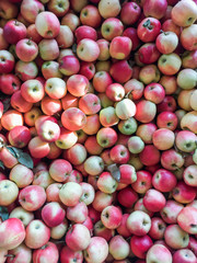 Overhead shot of a bin filled with apples.