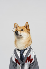 White collar dog