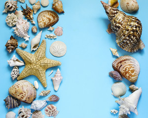 Exotic seashells and starfish collection flat lay on a blue background
