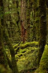 Old tree stump full of moss