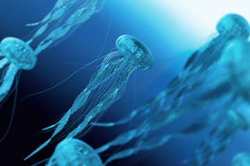 The jellyfish in blue ocean background