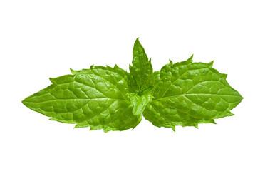 Leaves of mint