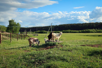 Countryside life style, South Ural, Russia