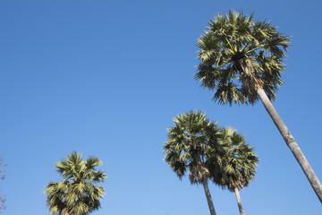 plams tree and sky