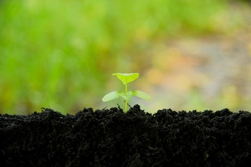 young plant growing in black soil on green nature background, young plant put in low middle, young plant in nature concept.