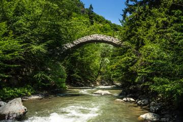 Tamar queen bridge