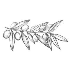 Olive Branch in Hand-Drawn Style
