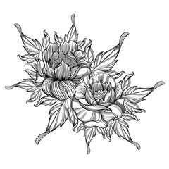 Hand drawn peonies. Sketch style. Floral design element. Black and white contour vector illustration for posters, coloring books and other items.