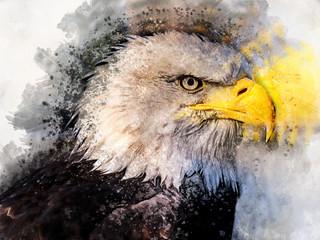 Eagle america bird watercolor painting symbol predator