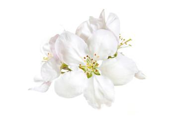 White spring flowers blossom, Floral wallpaper mock up