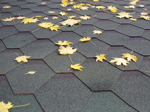 Yellow maple leaves on a cover of roofing material