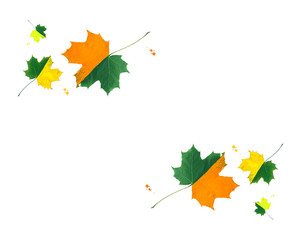 Bright maple leaves decorated with gouache paints on white background. Symmetrical creative autumn design.