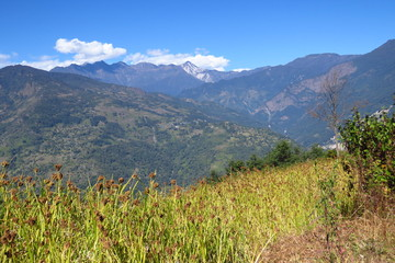 Millet field in front of a mountain landscape in the Himalayas, eastern Nepal