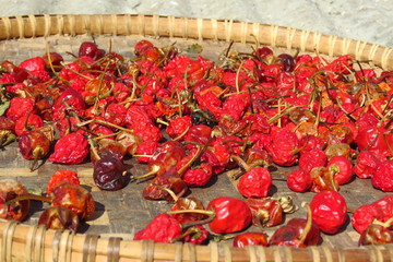 Wicker tray with red chili peppers drying outdoors in the sun, Himalayas mountain region, Nepal