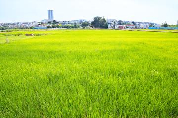 横浜郊外の田園風景