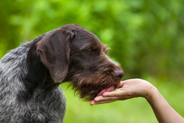 dog licking hand of woman