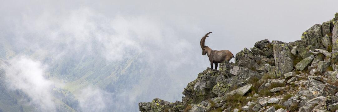 capricorn in the austrian alps, mountain boesenstein, styria, austria