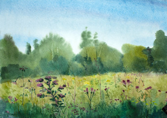 summer landscape with field and flowers
