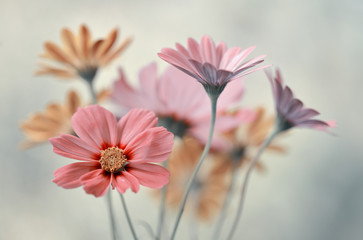 Fototapeta Bukiet pastelowych kwiatów obraz