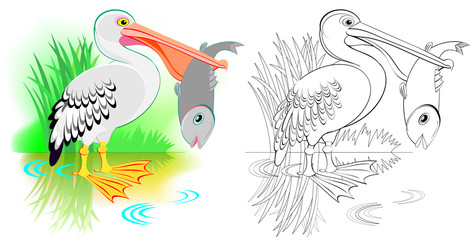 Colorful and black and white pattern for coloring. Cute pelican is fishing. Worksheet for children and adults. Vector image.