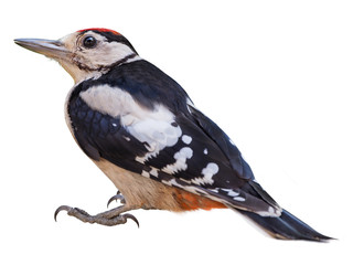 Young Great Spotted Woodpecker (Dendrocopos major), isolated on White  background Wall mural