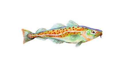 Watercolor painting codfish. Cod atlantic, vector illustration with details and optimized specks to be used in packaging design, decoration, educational graphics, etc