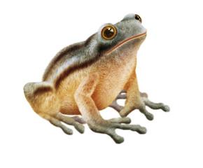 grenouille peluche - poilu-jolie -grenouille imaginaire -photo-illustration