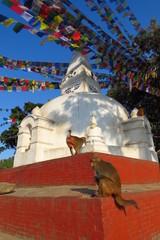 Monkeys at the Swaymbhunath stupa, aka Monkey Temple, Kathmandu, Nepal