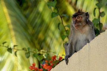 singe île maurice