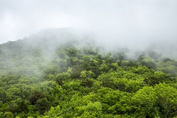 Fog in the mountains.Mystical landscape.The green tops of the hills are covered with thick fog. The sky is hidden behind the clouds.