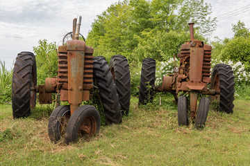 Antique tractors in field with dense undergrowth around them