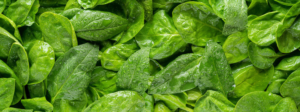 Spinach Panorama