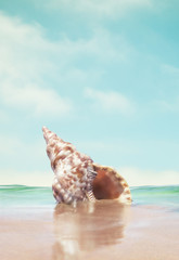 A triton seashell done in a retro style with subtle, desaturated colors.