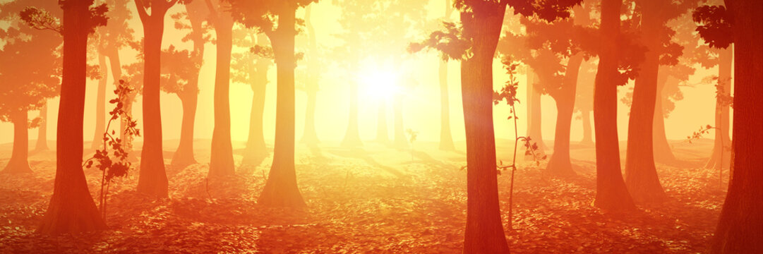 foggy forest at sunrise, peaceful landscape, warm magical background with trees