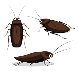 Cute Cockroach Poses Cartoon Vector Illustration