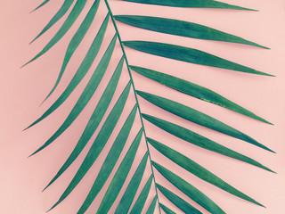 Palm leaf over pink background. Trend vintage toned.