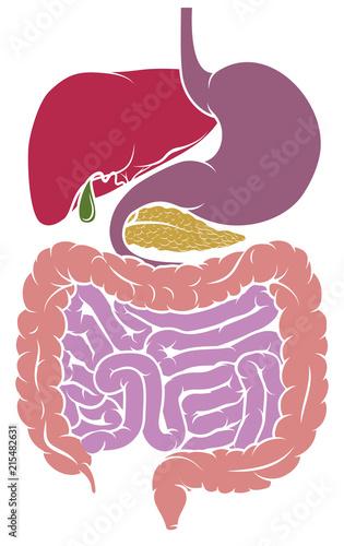 Human Anatomy Digestive System Tract Diagram\