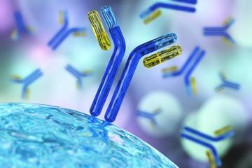 antibodies, immunoglobulins, the immune system