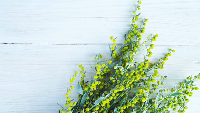 Beautiful blooming wormwood on wooden background.