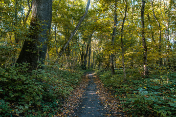 Autumn forest path landscape